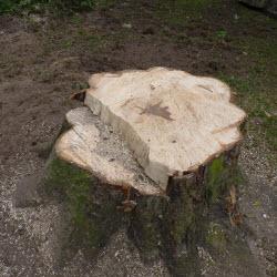 Wortels boom verwijderen chemisch